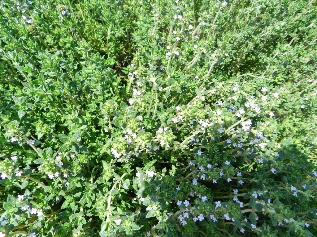 It's bloomin' thyme!